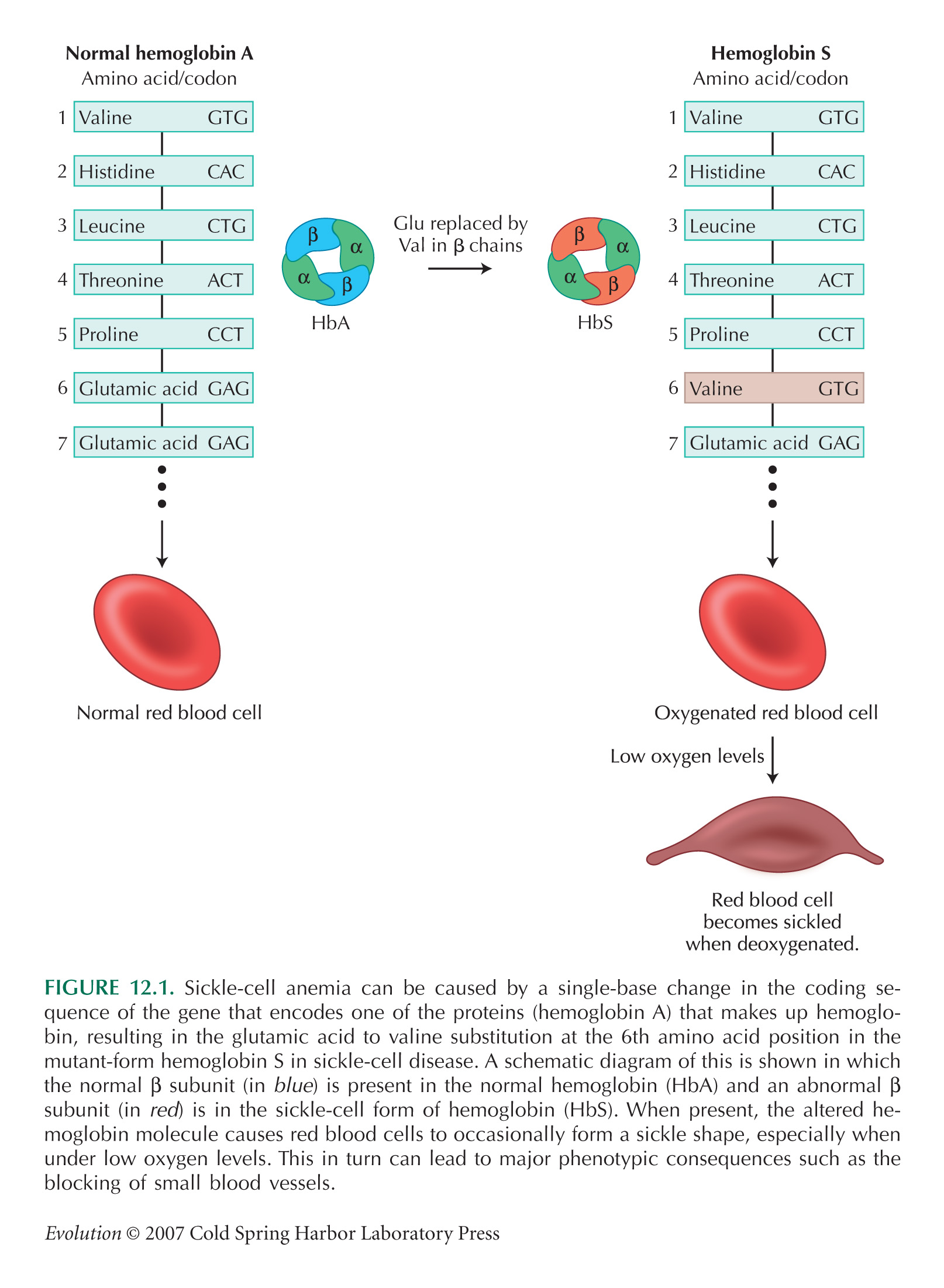 malaria sickle cell anemia relationship test