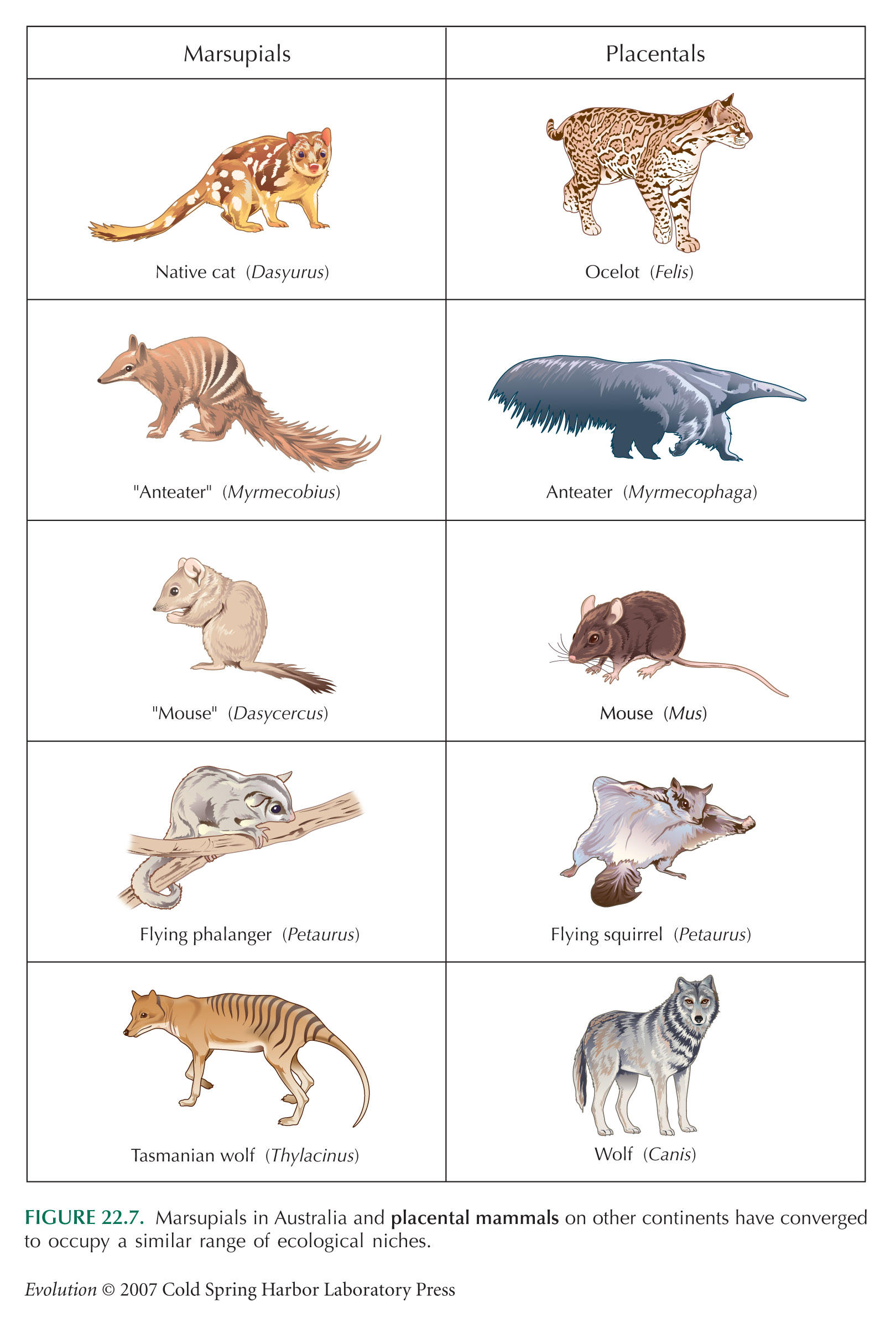 Examples Of Mammals Related Keywords & Suggestions ...