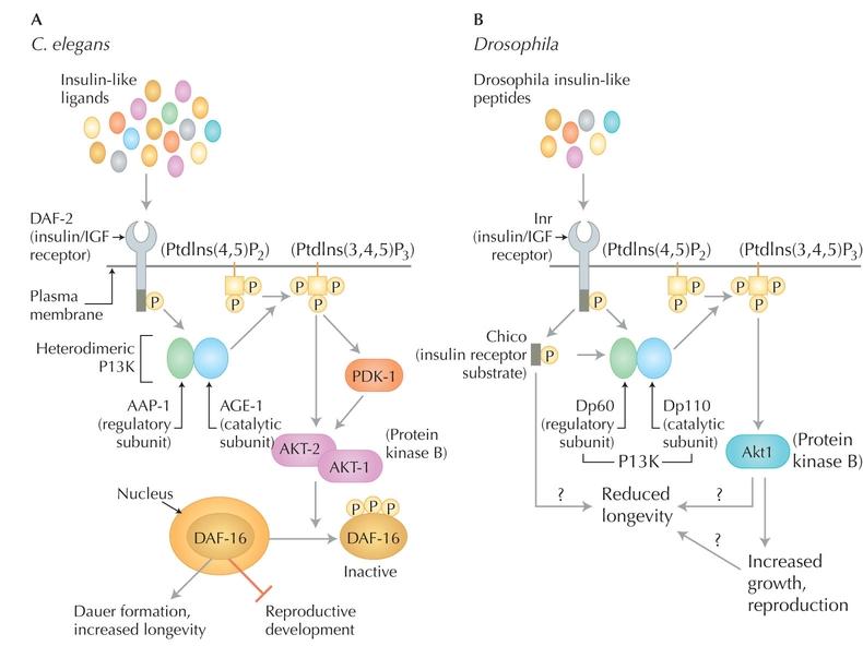 ebook Self Assembled Supramolecular